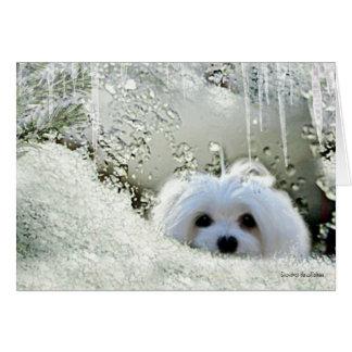 """Snowdrop que o """"pensamento maltês de você"""" carda cartão comemorativo"""