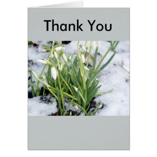 Snowdrops em cartões de agradecimentos da neve