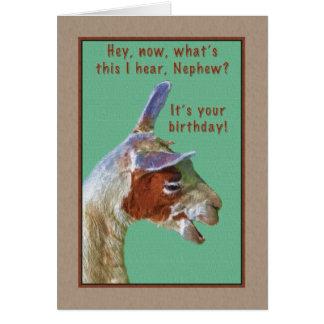 Sobrinho, aniversário, cartão de riso do lama