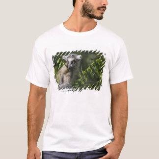 Soe o lemur atado (catta) do Lemur, Madagascar T-shirts