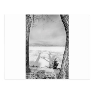 Sombras grandes de moldação preto e branco cartoes postais
