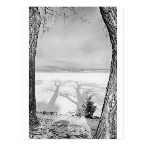 Sombras grandes de moldação preto e branco cartões postais