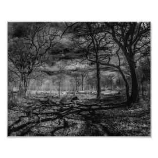 Sombras infravermelhas da paisagem nas madeiras impressão de foto