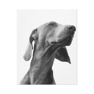 Sonhando o cão