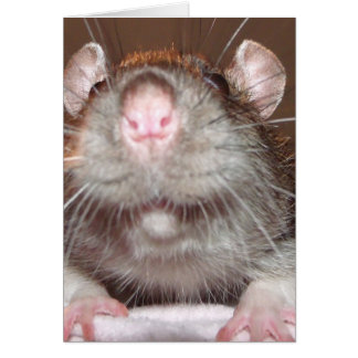 sorrindo o cartão de aniversário do rato