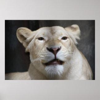Sorriso da leoa poster