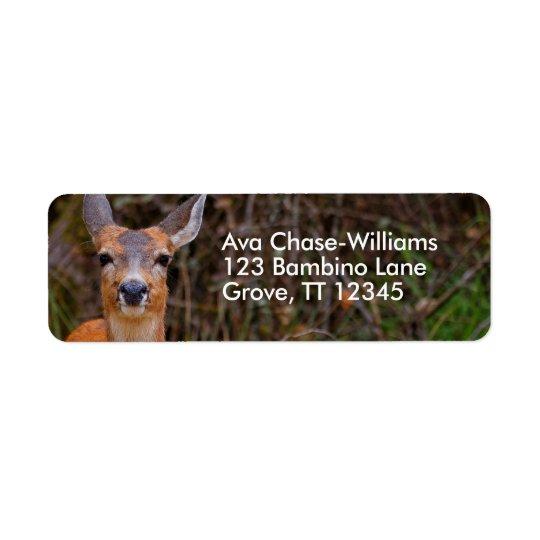 Sorrisos de cauda negra novos de um cervo etiqueta endereço de retorno
