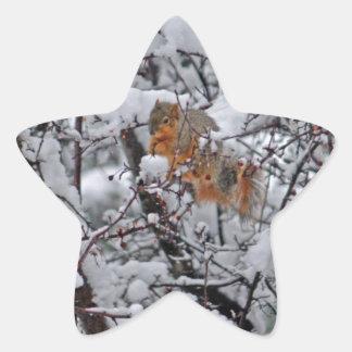 Squirrel em uma árvore nevado 6206 adesivo estrela
