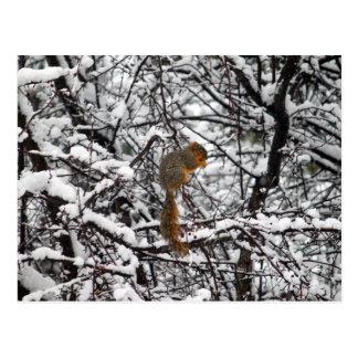 Squirrel na neve 6167 cartão postal