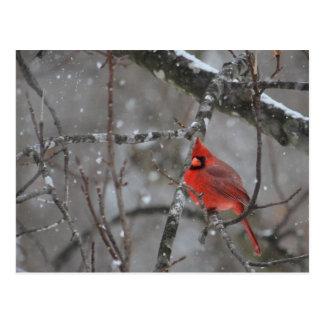 Sr. Cardinal - cartão