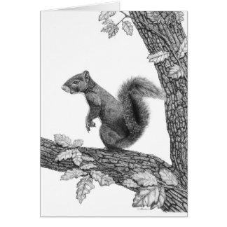 Sr. Esquilo - cartão de nota vazio