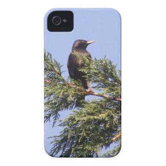 Starling em uma caixa corajosa de Blackberry da Capinhas iPhone 4