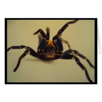 Stiking um Tarantula da pose Cartão