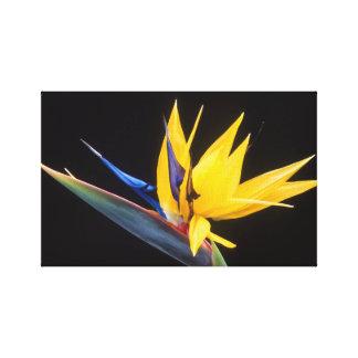 Strelitzia Pássaro da flor de paraíso Impressão De Canvas Envolvida