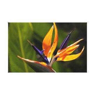 Strelitzia. Pássaro da flor de paraíso Impressão De Canvas Esticadas