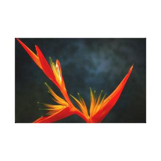 Strelitzia, pássaro da flor de paraíso impressão em tela