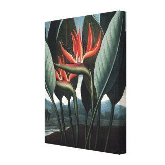 Strelitzia, pássaro de canvas florais do paraíso impressão em tela