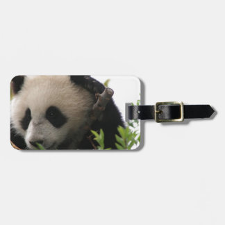 SU Lin, filhote de urso da panda gigante no jardim Etiqueta De Mala