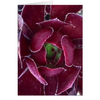 Succulent colorido cartão