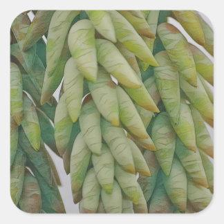 Succulent da cauda do asno adesivo quadrado