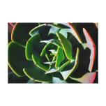 Succulent Impressão De Canvas Envolvidas