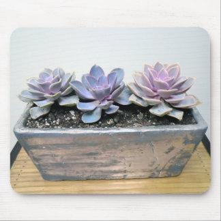 Succulent na prata mouse pad