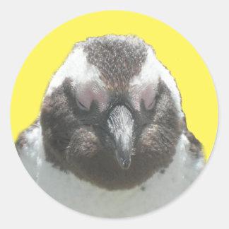 Sul - etiqueta africana da cara do pinguim adesivo