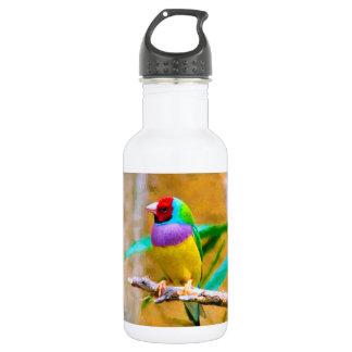 Sul - passarinho americano