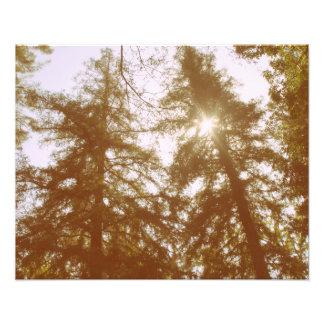 Sun através das árvores impressão de foto