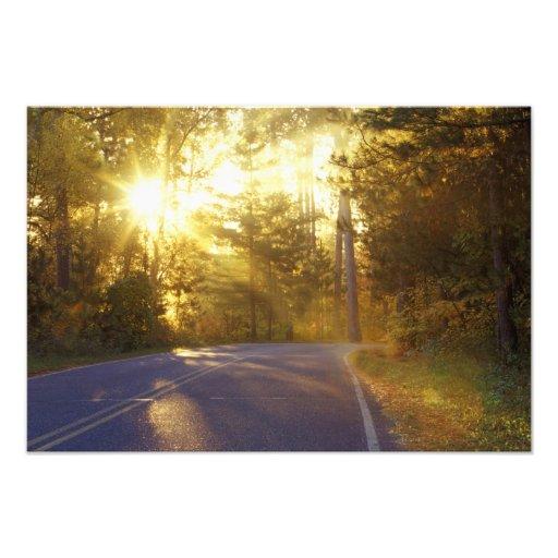 Sun estoura através da floresta na estrada em fotos