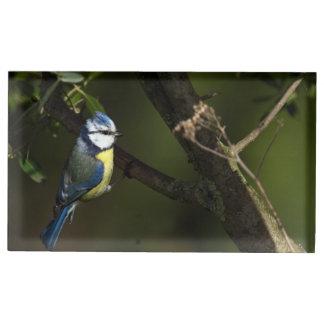 Suporte Para Cartão De Mesa Melharuco azul euro-asiático, caeruleus dos