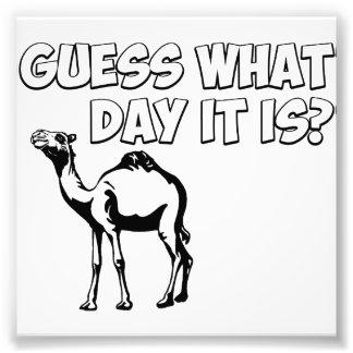 Suposição que dia é? Camelo do dia de corcunda Impressão De Fotos