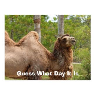 Suposição que dia é citações engraçadas do camelo cartão postal