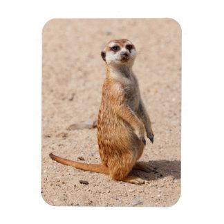 suricate foto com ímã retangular