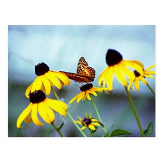 susan de olhos pretos com borboleta 1 cartão postal
