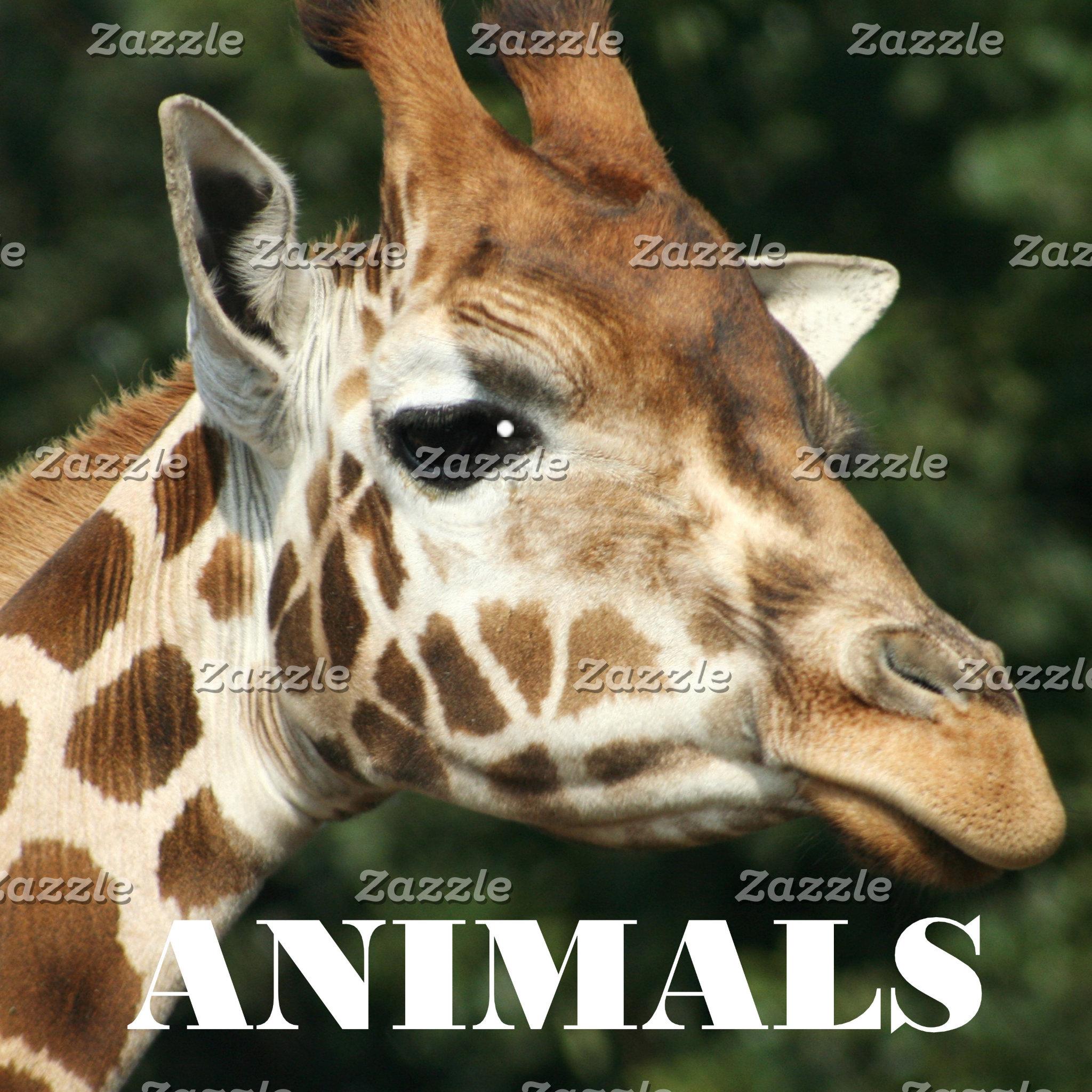 Animals, Photography, Digital