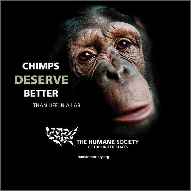 Chimps Deserve Better