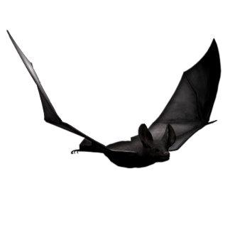 Halloween Bats Mixed Designs