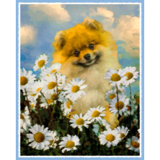 Pomeranian In Daisies (new)