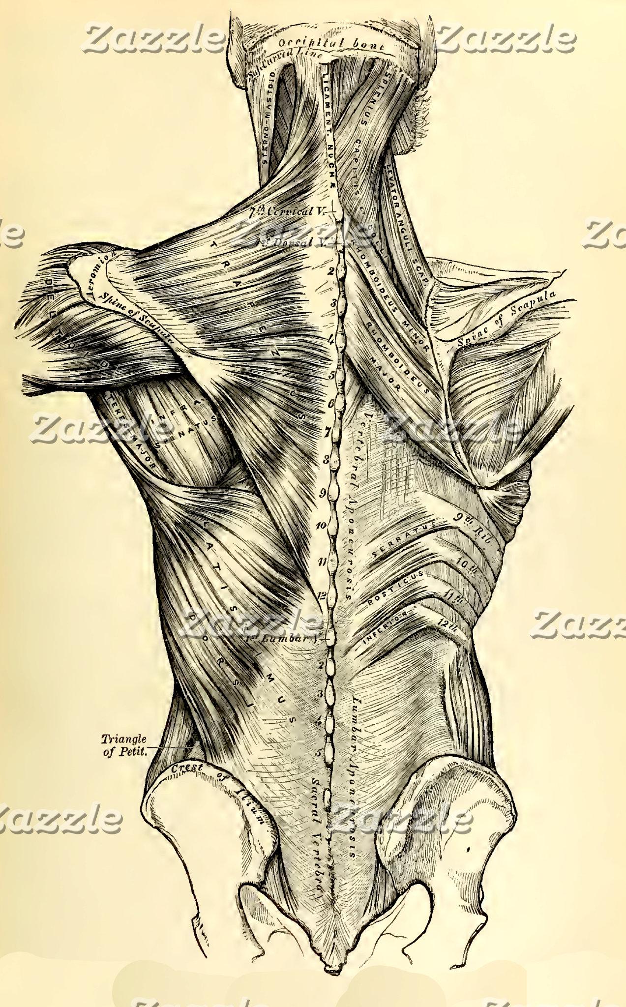 Vintage Anatomy | Back II