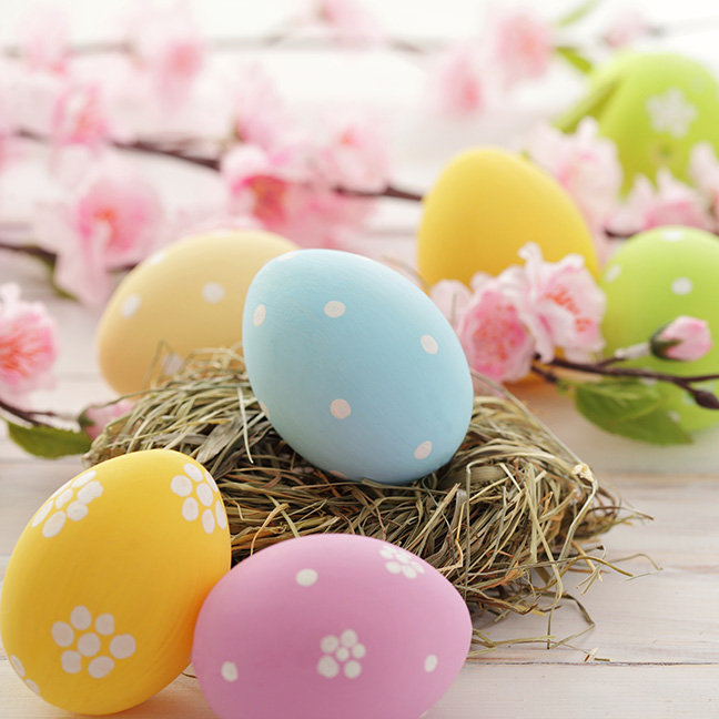 Colorful Easter Eggs and Branch with Flowers