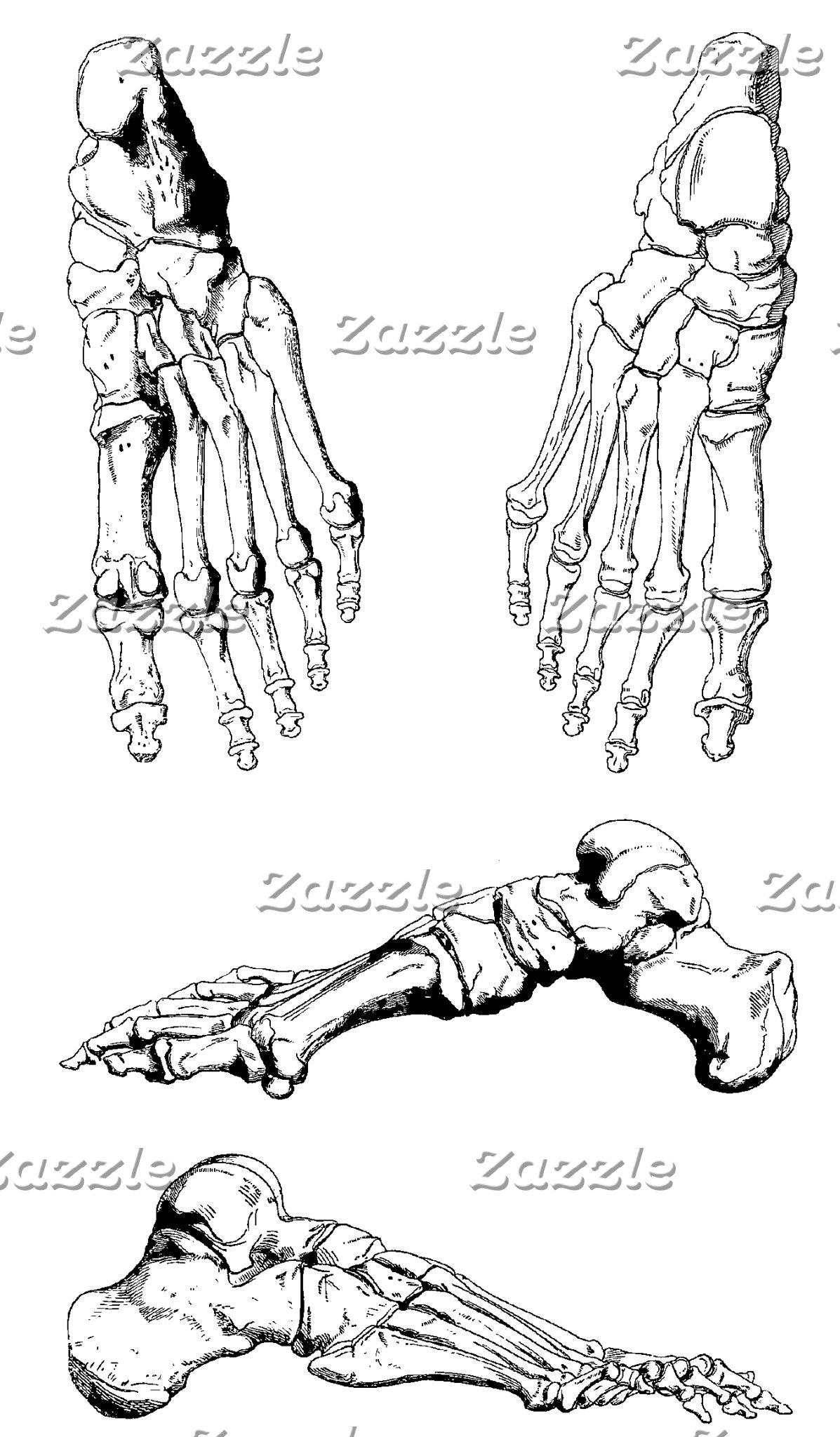 Vintage Anatomy Bones of the Foot II