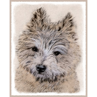 Cairn Terrier Puppy