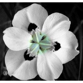 Delicate White Orchid
