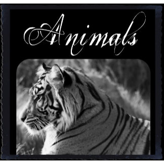 Animals, Pets & Wildlife