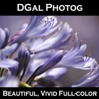DGal Photog