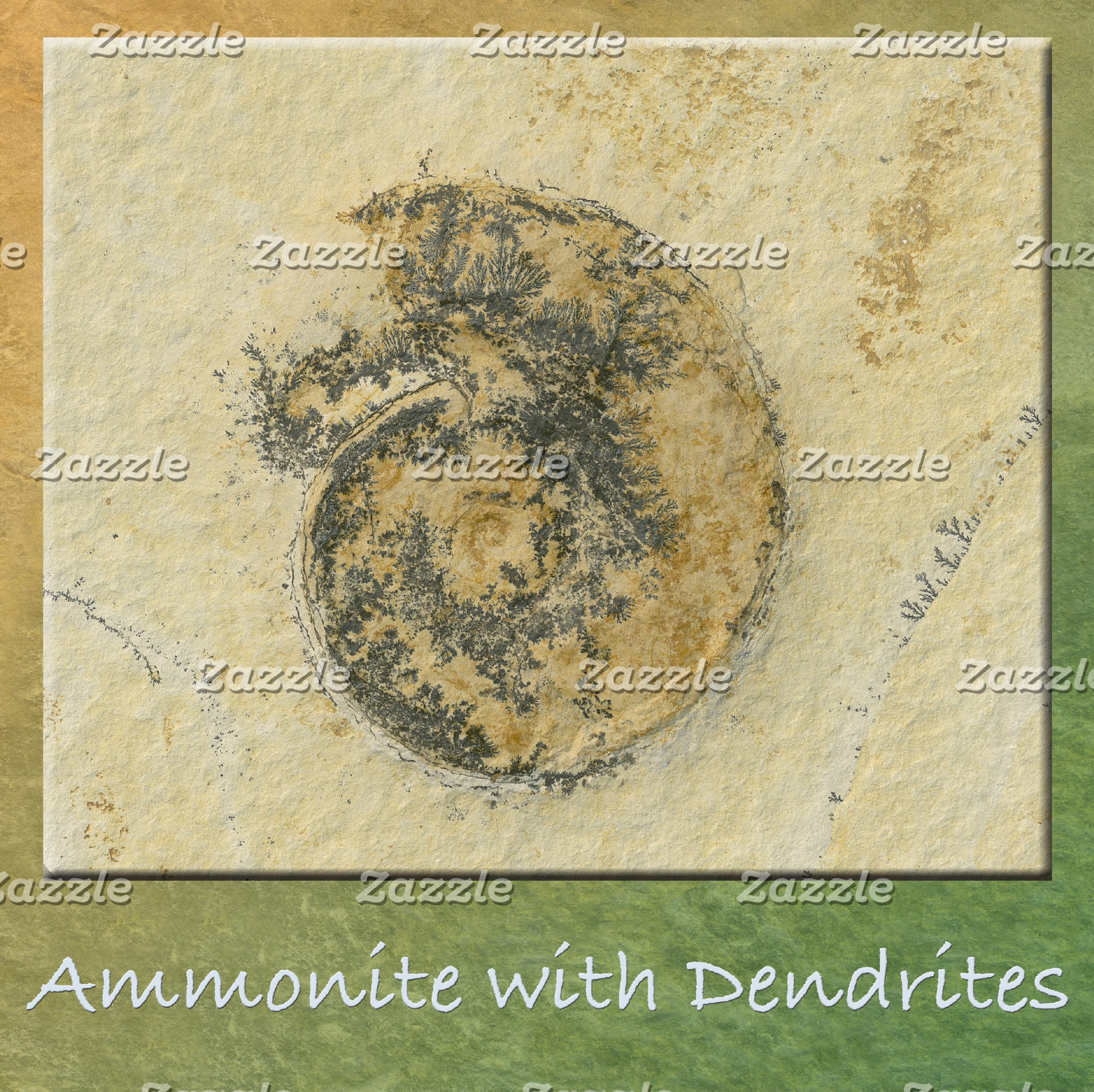 Ammonite with Dendrites