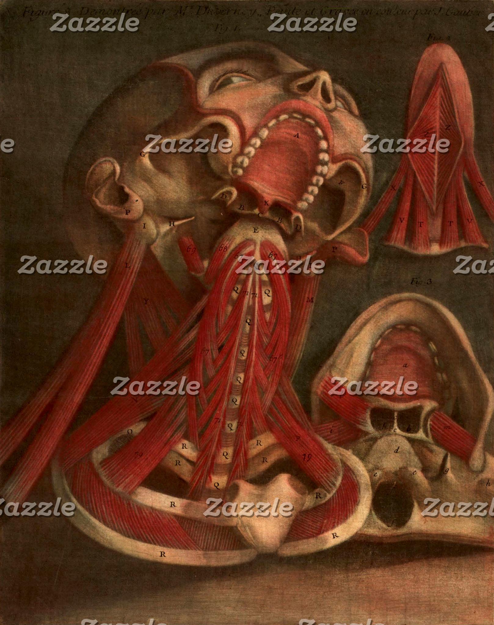 Vintage Anatomy Illustration | Head and Face