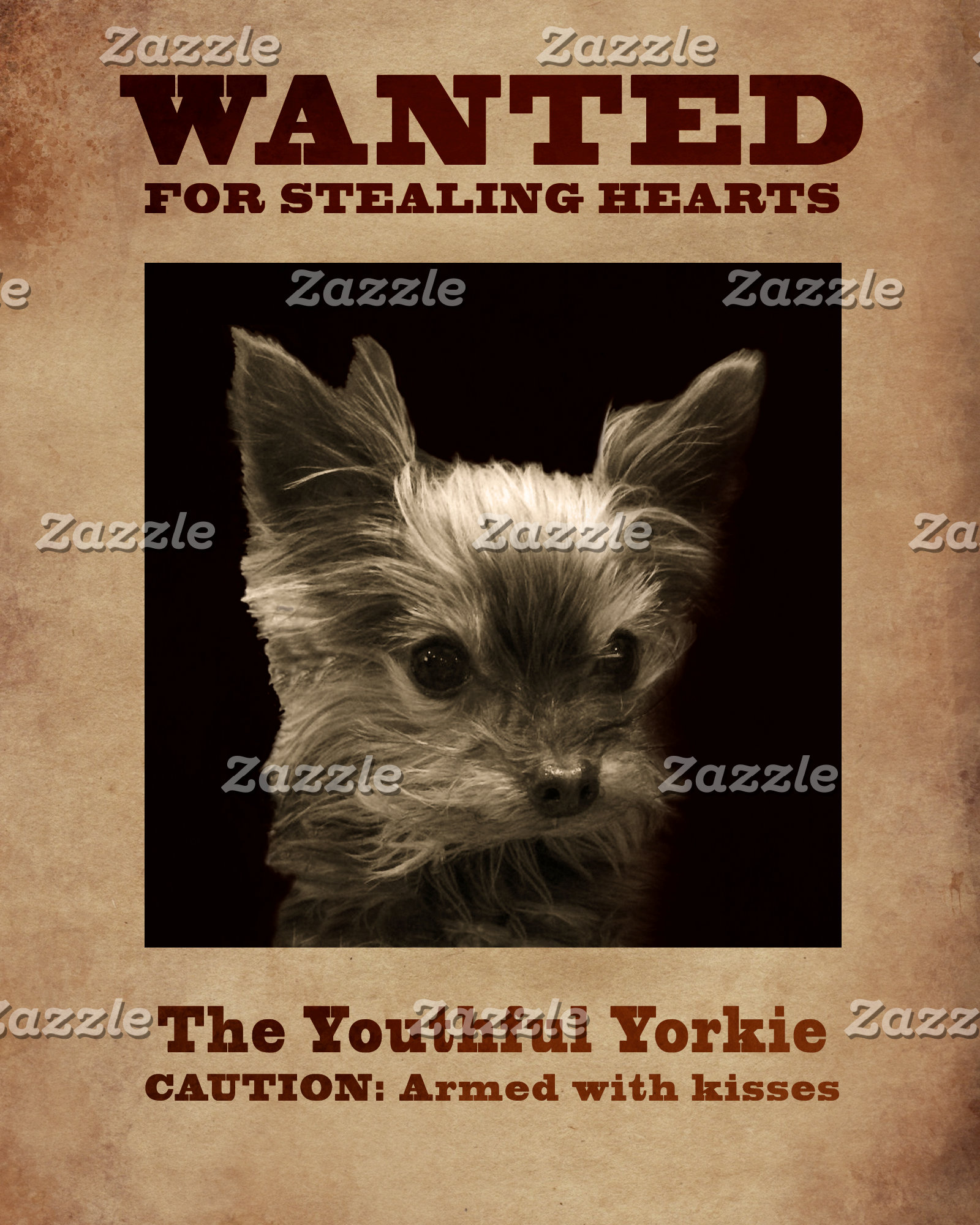 The  Youthful Yorkie