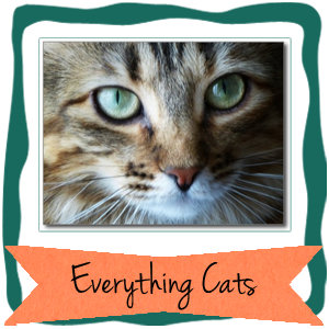 Everything cats